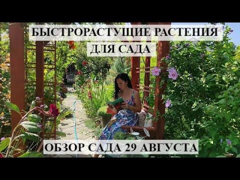 , title : 'БЫСТРОРАСТУЩИЕ РАСТЕНИЯ для сада | ОБЗОР сада 29 августа | РЕДКИЕ РАСТЕНИЯ | цветущий летний сад