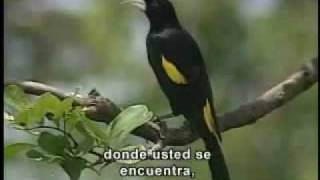 Reserva Natural de Tambopata: Selva Amazónica en Madre de Dios - parte 2
