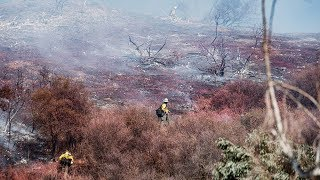 «После дождя воздух будет загрязнен еще больше». Какую опасность несут пожары в лесах Калифорнии