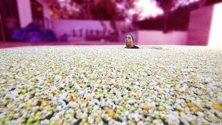 1 MILLION PIECES OF POPCORN IN POOL