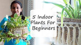 തുടക്കക്കാർക്കായി 5 മികച്ച ഇൻഡോർ ചെടികൾ    5 Best Indoor Plants For Beginners   #indoorplants