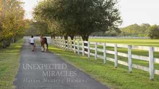 Unexpected Miracles - Horses Healing Humans