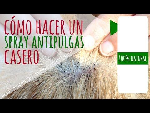 Spray Casero Antipulgas para Perros