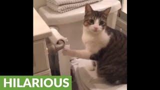 Cat destroys toilet paper roll, then rolls it back up! | Kholo.pk