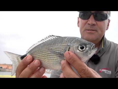 La pesca su una picca in Altai