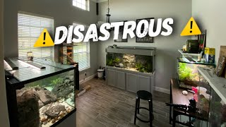 Dart Frogs Dead - 400 Fish DEAD This Couldnt Get Worse Can It?