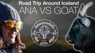 ANA vs THE HITCHHIKING GOAT | Iceland Road Trip | Adventureholix | Season 1 Episode 6