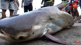 ลุ้นระทึก! ตกปลาบึกยักษ์เขื่อนราษีไศล Amezing Fishing Super Big Fish in Isaan Thailand