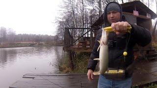 Река жданка платная рыбалка