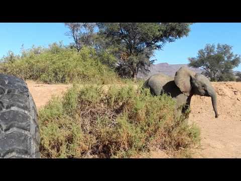 Elefantes del desierto en Namibia: elefantito juguetón