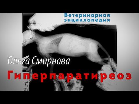 Гиперпаратиреоз, первичный и вторичный