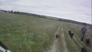 preview picture of video 'Friendly Dog Walkers on Salisbury Plain'