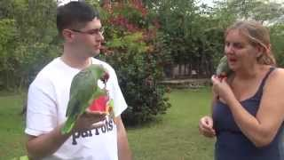 Belize Bird Rescue - Releasing Parrots Back to the Wild