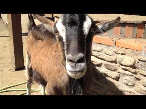 Al Rifugio Animali Felici di Brissago Valtravaglia