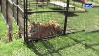 Rumænien forbyder vilde dyr i cirkusser