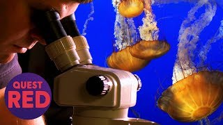 Climate Change Causes The Ocean To Get Overrun With Jellyfish! | Attack Of The Giant Jellyfish