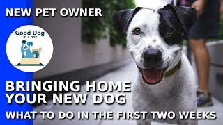 Bringing a New Dog Home for New Dog Parents