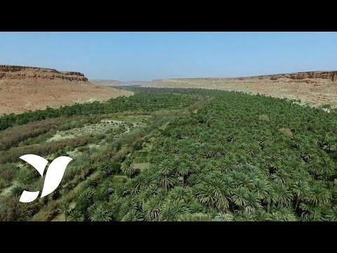 9 variétés des meilleures dattes marocaines