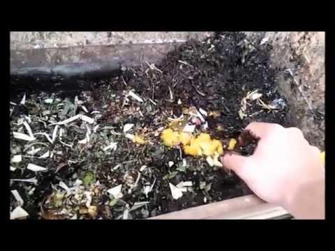 El medio combinado de las pulgas y las lombrices