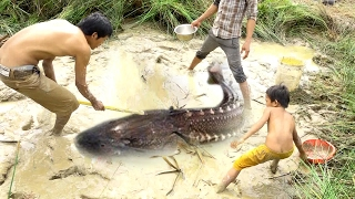 Wow Amazing Fishing - How To Catch Fish By Hand In Cambodia - Catch a lot of fish