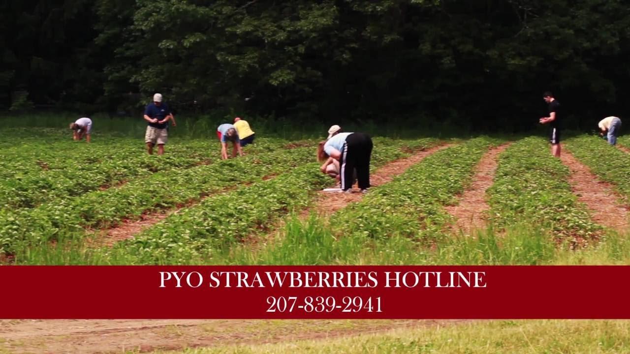 Patten's Farm Summer 2015