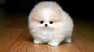 Милые детёныши животных - beautiful baby animals