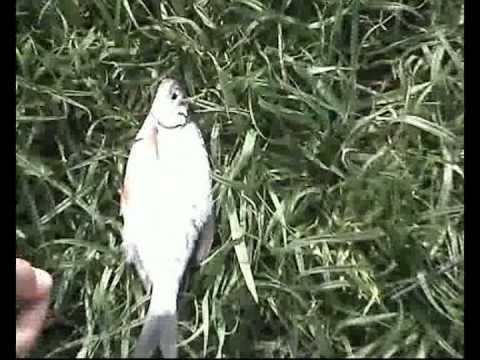 Il piranha per pescare per accaparrare cercatori di profondità sonici