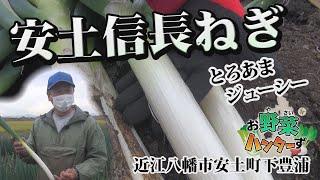【お野菜ハンターず】安土信長ねぎ 近江八幡市安土町下豊浦