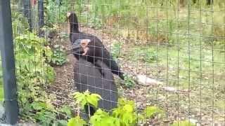 Хищные птицы в зоопарке