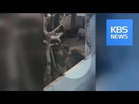 대구 주택가에 멧돼지 출몰…2마리 사살 / KBS뉴스(News)