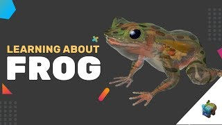 LEARNING ABOUT FROG IN AR! : Assemblr