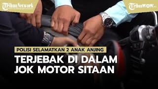 Polisi Selamatkan Dua Anak Anjing yang Terjebak di Dalam Jok Motor Sitaan dengan Kondisi Lemas