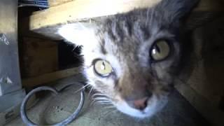 Как поймать дикого котенка в подвале