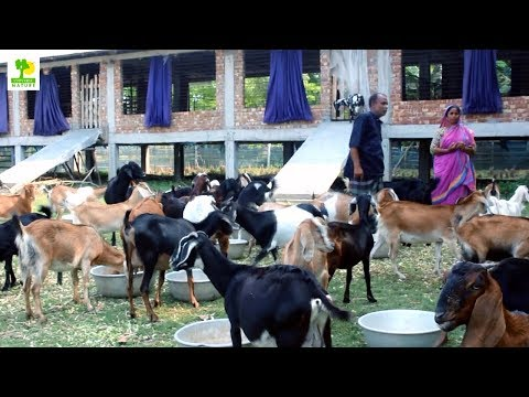 , title : 'How to Start a Business - Goat Farming Business Ideas with Low Investment and High Profit
