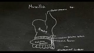 Tutes Online - The Maxilla