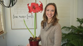 How to plant, care, and rebloom Amaryllis