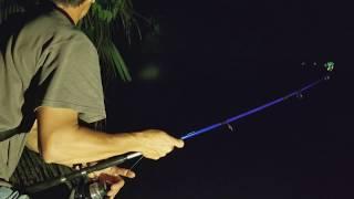 Câu Đêm Cá Rung Chuông Liên Tục Quíu Luôn, Cá Kéo Mất Cần l Fish Hunter At Night