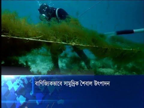 সামুদ্রিক শৈবালের বাণিজ্যিক উৎপাদনে যাচ্ছে বাংলাদেশ | ETV News