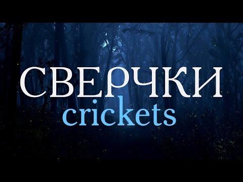 Сверчки – 3D звук ♬ Crickets – 3D sound
