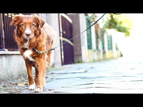 Warum MEHR als eine LEINE für den HUND | Hundeleinen | The leash you need