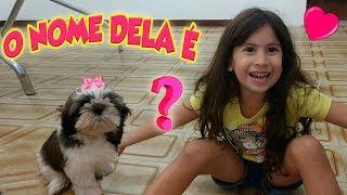 O NOME DELA É... Nova Rotina De Casa Com A Minha Cachorrinha ♡
