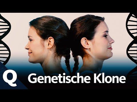 Co prozrazují dvojčata o genech?