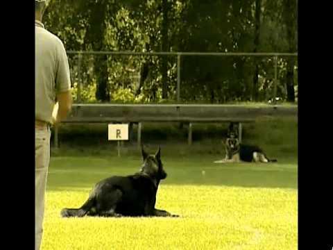 Preview video Ginoginelli von Karthago Bundessieger 2011 B 98