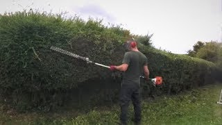 Trimming Overgrown Hedges
