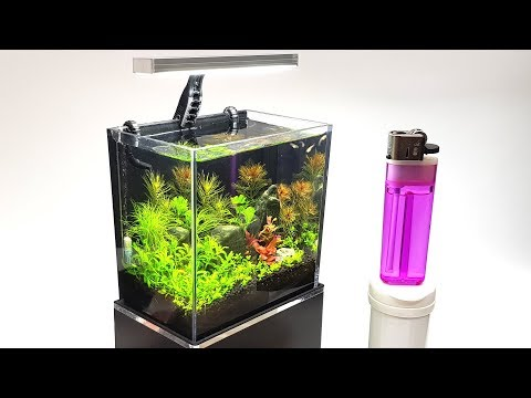 Two week update on the tiny GoPro packaging aquarium