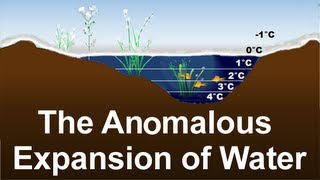 Anomalous Expansion of Water. Why does ice float? Strange density of water [Science Education]