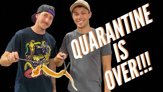 The End of Quarantine! (For Snakes)