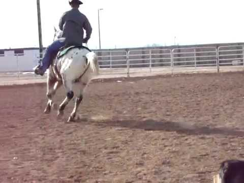 5 Year Old Appaloosa Gelding Mp3