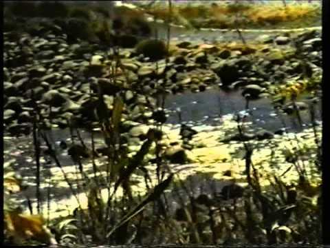 vídeo institucional del Grupo de Los Espinillos