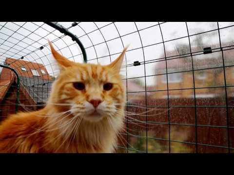 Outdoor Katzengehege   Omlet Haustierprodukte